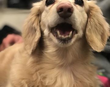 愛犬の誕生日!!