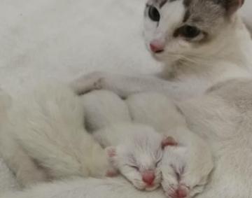 うちの猫の赤ちゃんが生まれました